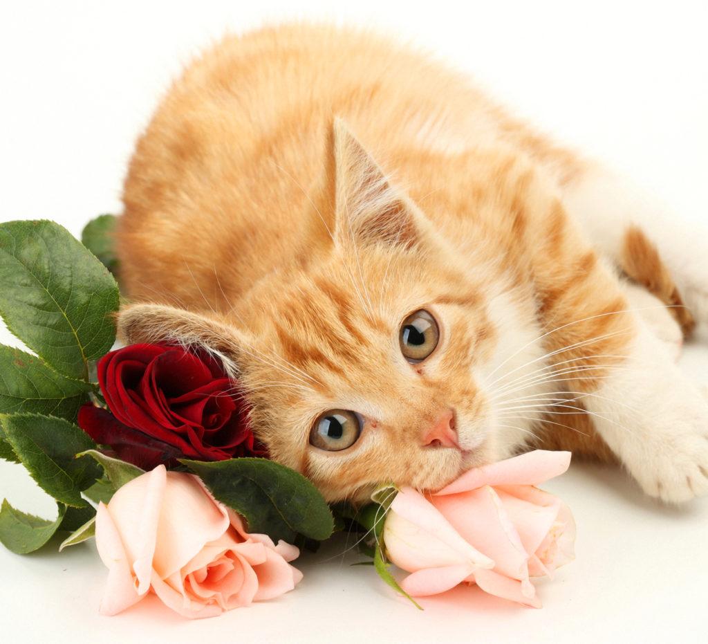 Открытку добрым, открытки с рыжим котом с днем рождения